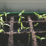 urban gardening breeding